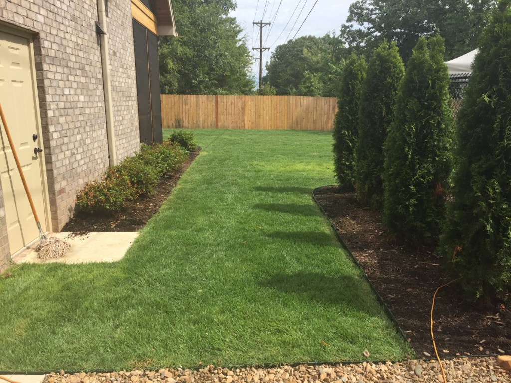 Let's talk about keeping your lawn healthy and beautiful (maybe without the mop)